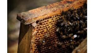 Pszczoły to serce ekosystemu. Sprawdź, dlaczego należy o nie dbać Biuro prasowe